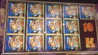 getlinkyoutube.com-Temple of the Tiger quick live play $8 bet ** SLOT LOVER **