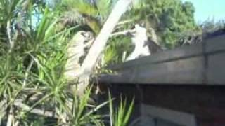 getlinkyoutube.com-NINJA CAT - GATO NINJA