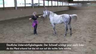 "getlinkyoutube.com-Folge 3 ""Aus Angst wird Gehorsam, dann Gewohnheit"" Die Pferdepsyche"