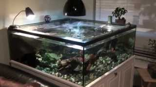 getlinkyoutube.com-Turtle Tank sump and Filter Set Up
