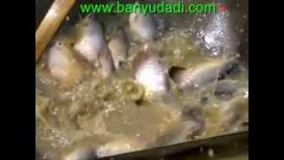 getlinkyoutube.com-Cara Budidaya Ikan Gurami Lengkap