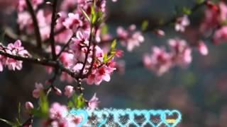getlinkyoutube.com-Như Hoa Mua Xuân karaoke