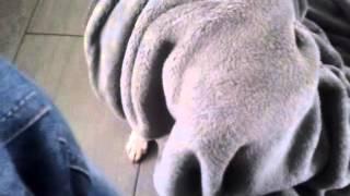 Blob with the dog leg full movie