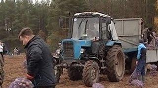 Сотрудников новгородского правительства отправили на картошку