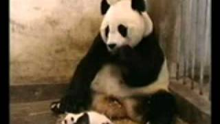 Funny Videos.3gp - 4shared.com - file sharing - download movie file..flv