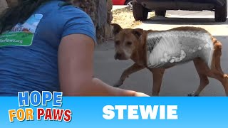 Homeless dog was so hungry he ate rocks!  Thanks to your support, we saved his life!