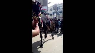 getlinkyoutube.com-Camel qurbani 2014 in Karachi