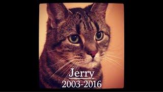 getlinkyoutube.com-R.I.P Jerry