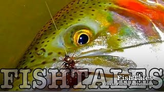 getlinkyoutube.com-FishTales: POOL TROUT FISH-OUT