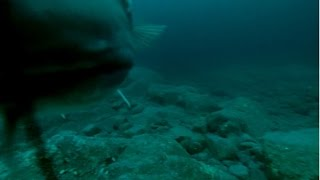 getlinkyoutube.com-Norwegia dorsze pod wodą cod under water gopro 2014
