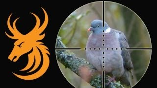getlinkyoutube.com-Airgun Hunting - Long range pigeons and rabbits with a Daystate Mk4 iS