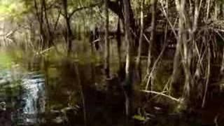 getlinkyoutube.com-AMAZONIA