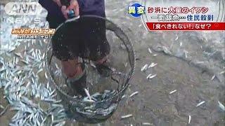 getlinkyoutube.com-海岸にイワシの大群 住民大興奮 でも原因は・・・(15/12/15)