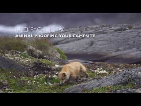 Animal Proofing Your Campsite