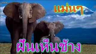 getlinkyoutube.com-ฝันเห็นช้างหรือช้างไล่
