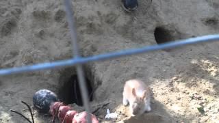 getlinkyoutube.com-И только кролики продолжают работать