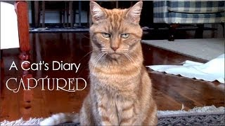 getlinkyoutube.com-A Cat's Diary: Captured by Humans