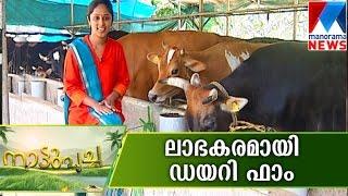 getlinkyoutube.com-DairyFarm A Profitable business  | Manorama News