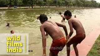 getlinkyoutube.com-Young boys jump into the India Gate pond, in summer