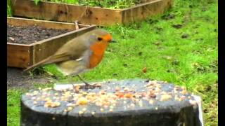 getlinkyoutube.com-Community Garden Birds