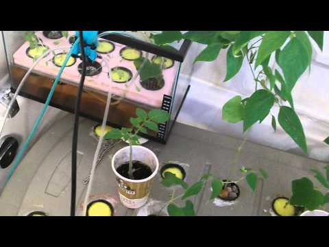 Aeroponic system home made part 13