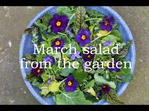 March salad from the garden