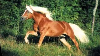 getlinkyoutube.com-Raças De Cavalo