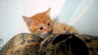 Рыжий котенок -- позитив.