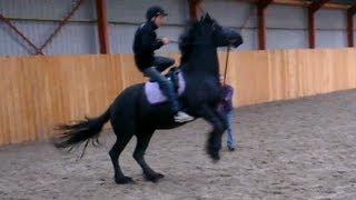 getlinkyoutube.com-Martin voor het eerst paardrijden! Friesian Horse