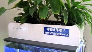 getlinkyoutube.com-3年以上水替え不要の「せせらぎ室内ビオトープ」.MOV