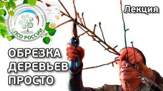 Как проводить обрезку плодовых деревьев. Лекция  С.Д. Айтжановой
