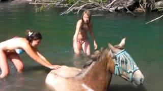 getlinkyoutube.com-Ma jument qui se roule dans l'eau