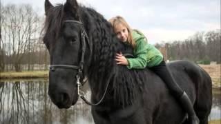 getlinkyoutube.com-Konie ze Stajni Trzcieliny