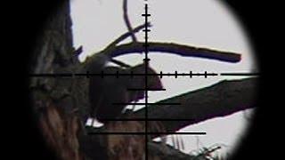 getlinkyoutube.com-FX Bobcat .22 Squirrel Pest Control