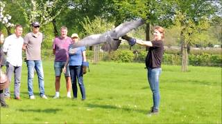 Falconry Experience Day 21 april 2018 Birds@Work