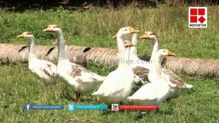 Mannu; Special Agricultural Programme