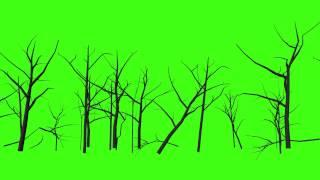 getlinkyoutube.com-FREE GREEN SCREEN Moving Forest, Tree