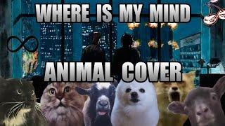 getlinkyoutube.com-The Pixies - Where Is My Mind (Animal Cover)