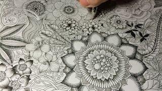 getlinkyoutube.com-High Speed Botanical Drawing (×16)