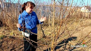 getlinkyoutube.com-Весенняя обрезка яблони в деталях