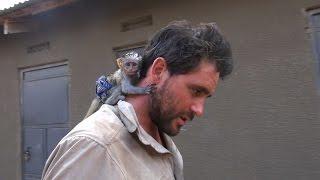 getlinkyoutube.com-Baby Vervet Monkey Rescued from African Brush Fire