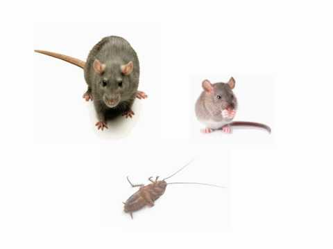 Pest Control for Basic Food Hygiene Training