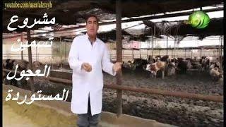 getlinkyoutube.com-مشروع تسمين العجول المستوردة واهم المعاملات من استقبال الحيوان حتى مزارع التسمين