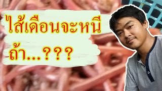 getlinkyoutube.com-วิธีเลี้ยงไส้เดือนดิน ในกะละมัง #สูตร1