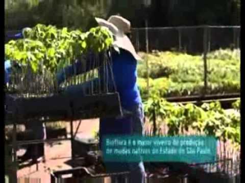 Globo Ecologia - Reflorestamento ambiental gera rede de oportunidades de trabalho e renda Pt. 2