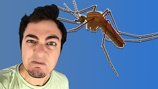 getlinkyoutube.com-Sinir Bozucu Sivrisinek Vurma Oyunu