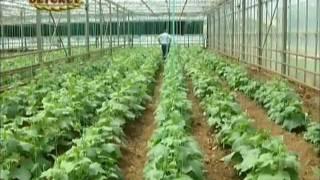 Örtüaltı Sebze Yetiştiriciliğinde İyi Tarım Uygulamaları