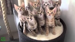 getlinkyoutube.com-Котяра, кошка, котик, cat, cat, kitten, милые котята