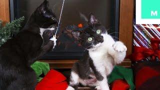 Christmas Kittens Holiday Yule Log