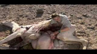 getlinkyoutube.com-Ultimate Survival - Bear Grylls eet geit en kameel.